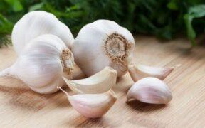 garlic 620x350 71517566476